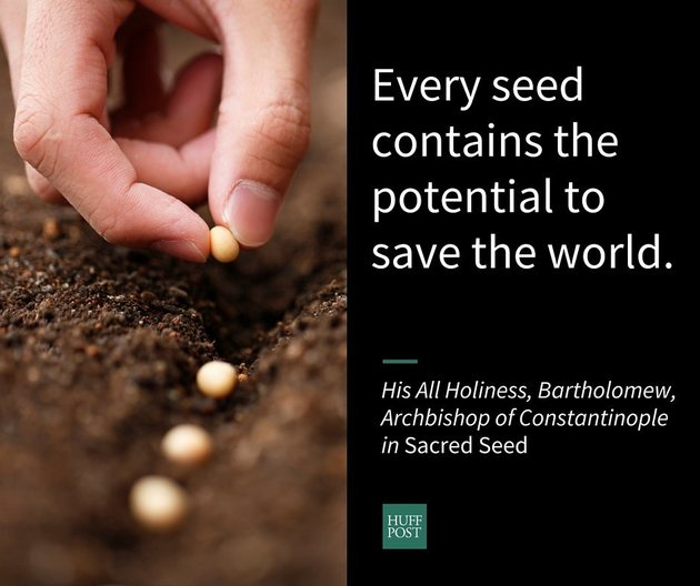 Every seed has the potential to save the world
